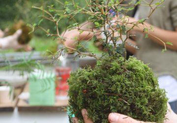 Le végétal au travail Bien etre au travail